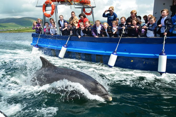 Dingle Dolphin Boat Tour