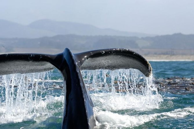 Whale Watching Cruise Los Angeles, Redondo Beach, Marina Del Rey, Santa Monica