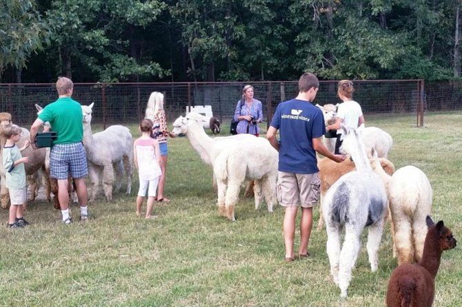 Alpaca Farm Tour in Adairsville Georgia