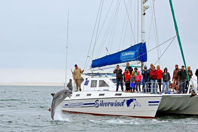 Croisière en catamaran d'observation des dauphins et des phoques au départ de Walvis Bay