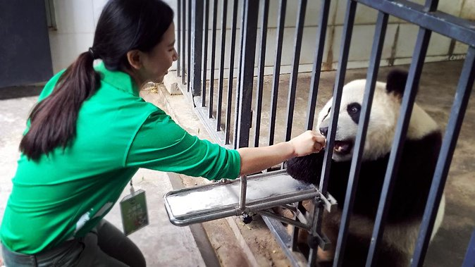 One day Panda Volunteering Experience