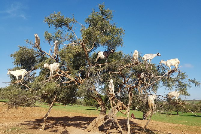 Private Day Trip from Marrakech to Essaouira City