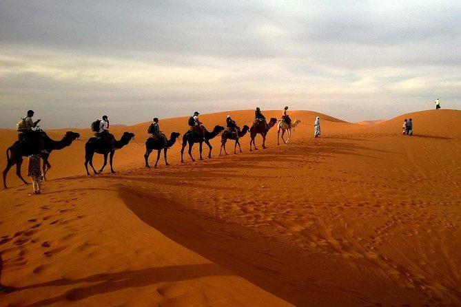Morning Dubai Desert Dune Bashing and Camel Ride