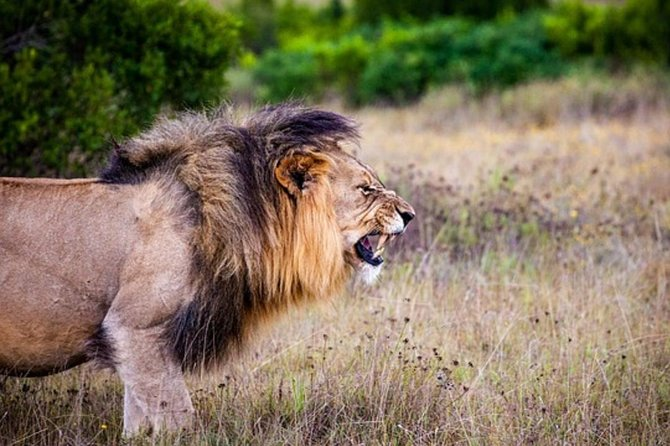 Pilanesberg Game reserve and Sun city