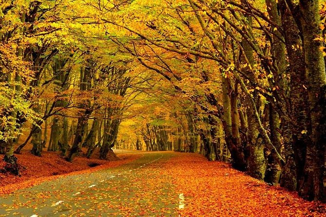 Follow the colors of Fall in Sabaduri Forest