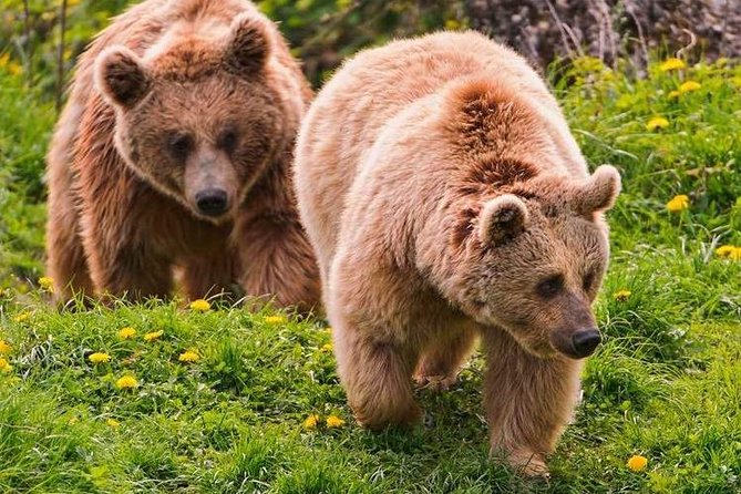 Libearty Bear Sanctuary and Bran - Dracula's Castle in One Day Tour