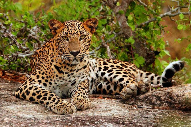 Private Day trip to Yala national park for half day Safari from Colombo/Negombo