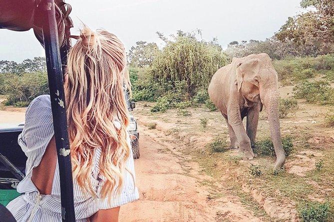 Wild Safari Udawalawe from Bentota