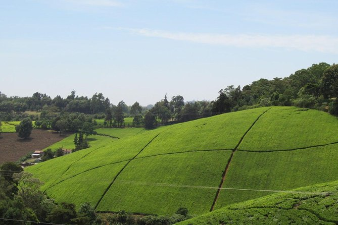Enthralling Kiambethu Tea Farm in Limuru