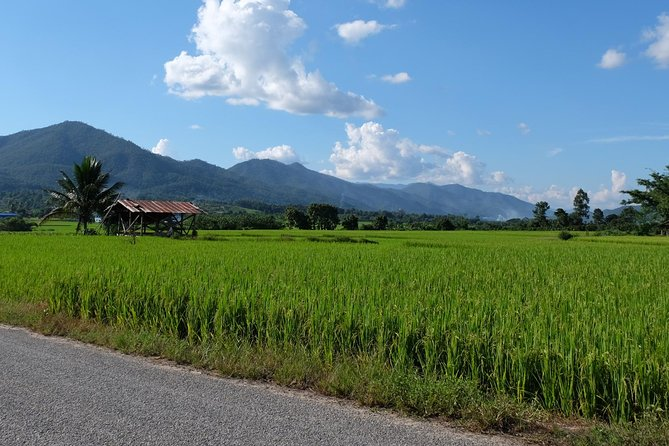 A Charming Exploration of Phrao
