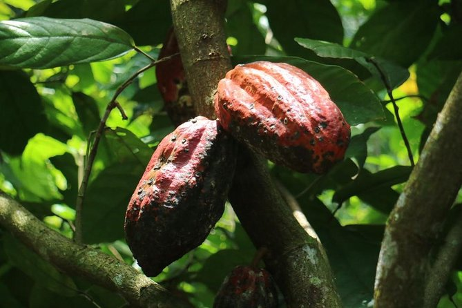 Chocolate Tour and tropical Fruits