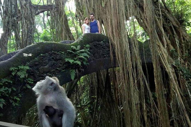 Best of Bali: Scenic of Ubud and Volcano Tour