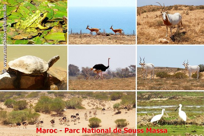 Full-Day Wildlife Tour Through Souss Massa from Agadir photo 3