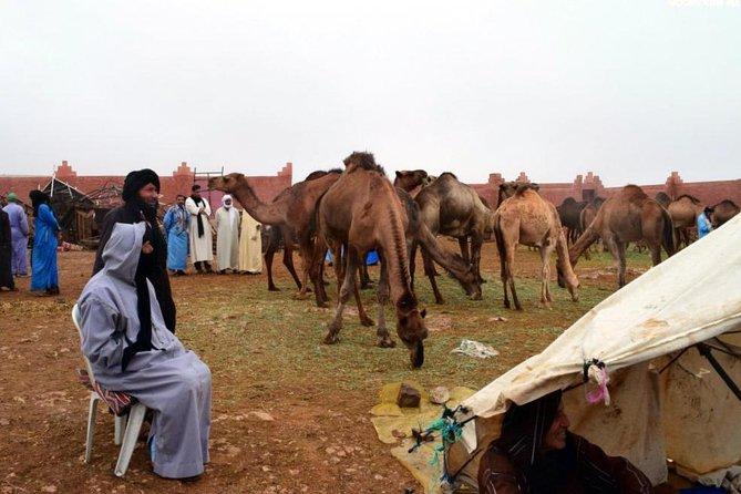 Saturday weekly Camel Market