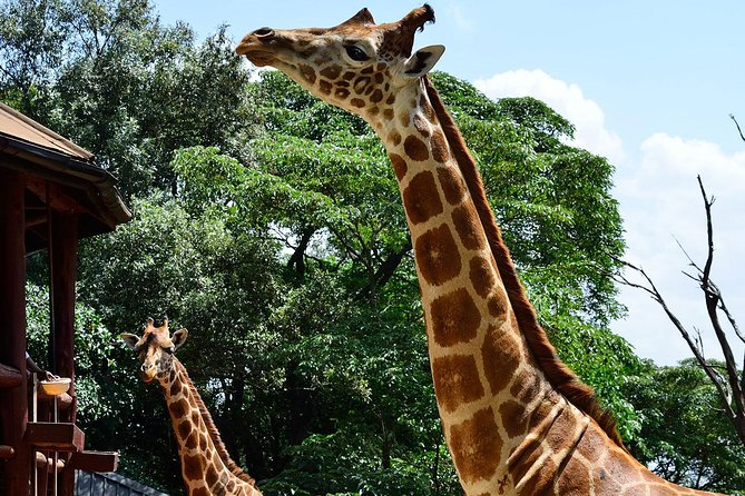 Best of half day Nairobi including National park,shed rick and giraffe center