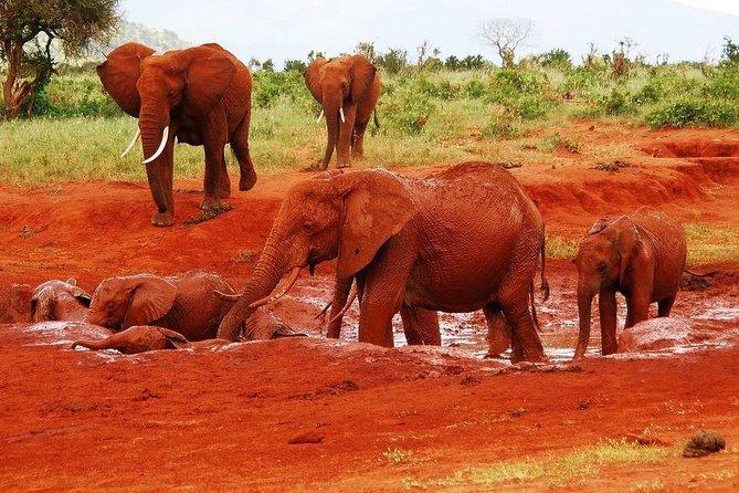 4 Days Kilimanjaro Experience - Mombasa