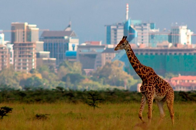 Early Morning Game Drive In Nairobi National Park