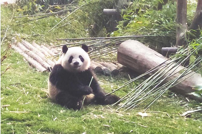 Chengdu Guided Tour: Giant Pandas and Shu Culture Museum photo 2