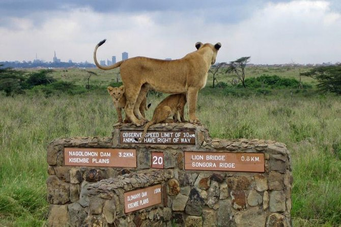 1 Full-Day Nairobi National Park, Elephant Orphange,Giraffe Centre Guided Tour