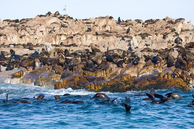Marine Big 5 Adventure from Cape Town