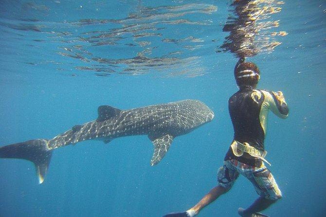 Snorkeling at Catalina Island