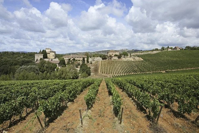 Wine, Beer and Cheese tasting tour in Tuscany from Florence