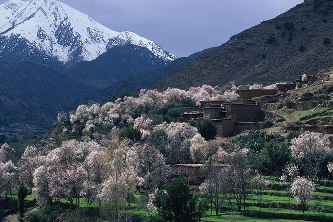 Private Ourika Valley Guided Day Trip including a Hike from Marrakech photo 9