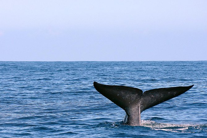 Whale Watching Tour in Mirissa from Hikkaduwa