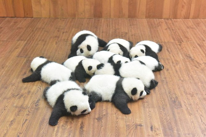 Private One Day Chengdu Panda Tour and Chengdu City visiting