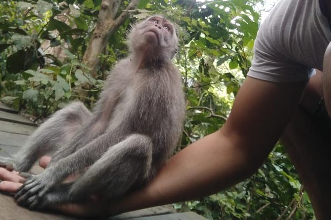 Monkey Forest, Tegallalang Rice Fields, Pura Taman Ayun & Tanah Lot