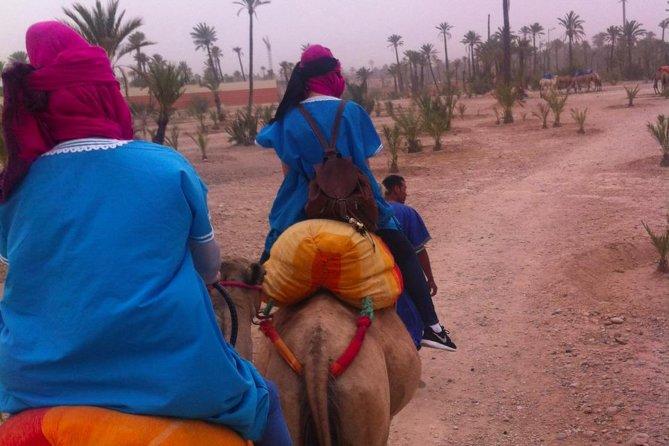 Camel trekking in the palm grove of Marrakech