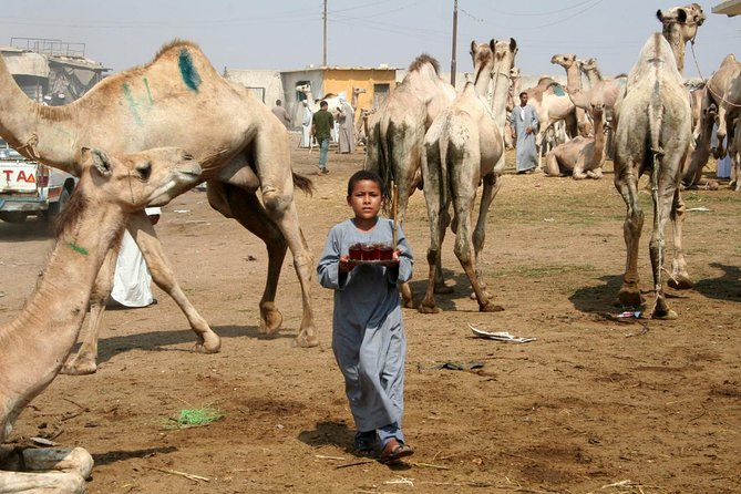 private tour to the Camel market of Birqash