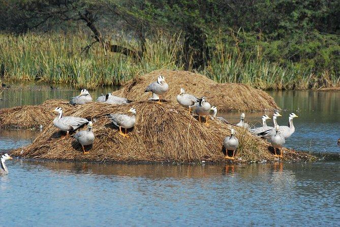 Sultanpur Bird Sanctuary Tour Near Delhi