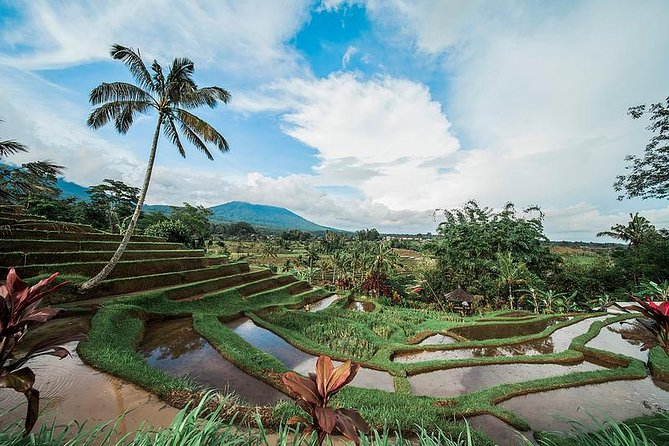 UNESCO Sites: Bedugul, Jatiluwih & Tanah Lot Full Day Tour