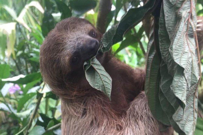 Sloths, Monkeys and Waterfall Experience