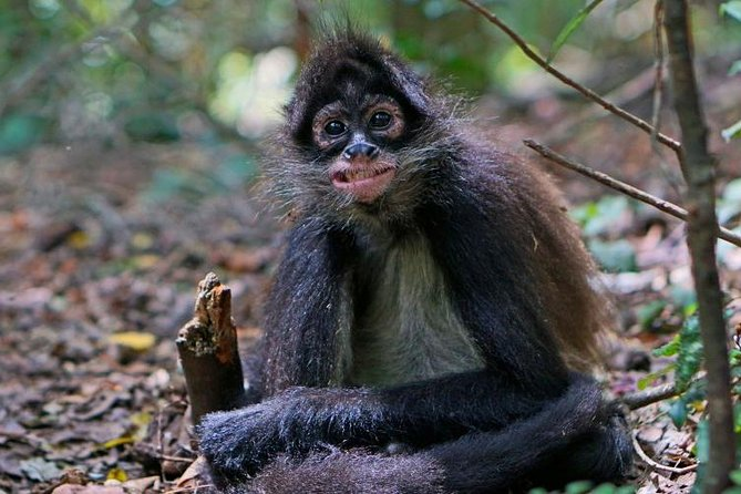 Elephant & Monkey Sanctuary Tour: Hartbeesport Dam