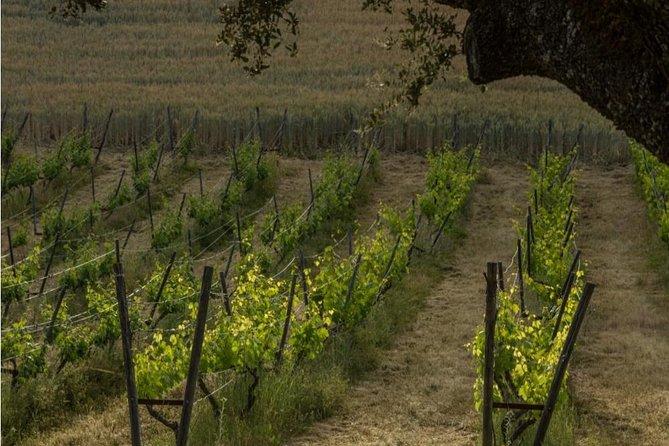 wine cellar ronda