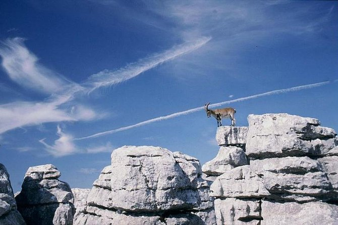 Private Hiking Tour to El Torcal from Marbella or Malaga photo 1