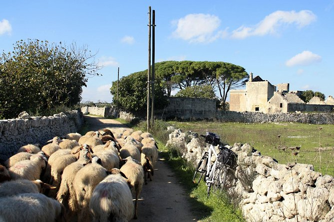 Puglia Farm tour cheese and extra virgin olive oil