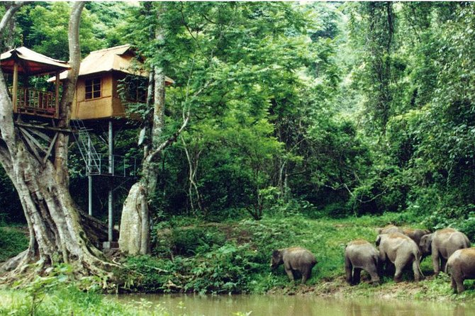 Private Xishuangbanna and Wild Elephant Valley Day Tour from Jinghong
