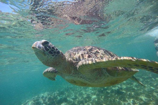Apo Island:Swimming with Sea Turtle (Dumaguete Daytour)