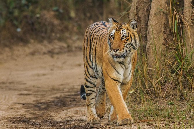 Full Day Private Tour to Sariska Tiger National Park by Car from Jaipur