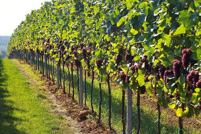 Day trip in Kakheti-wine tour