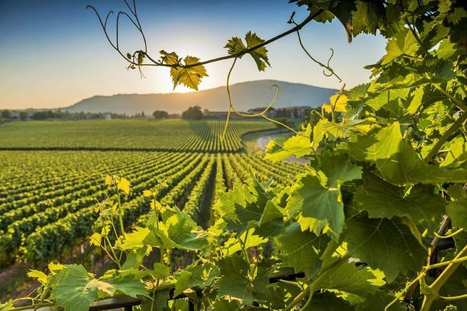 Sparkling Franciacorta Private Wine Tour with Lunch and Wineries Visit
