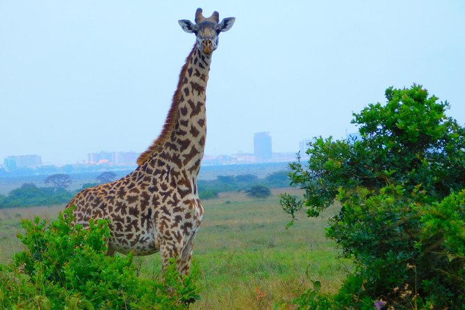 Guided Nairobi City Excursion Nairobi NP, Orphanage & Giraffe Center with Lunch
