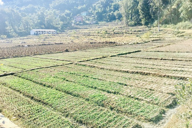 Silkworm Farm (Sericulture) Visit with Easy Hiking in Pokhara Nepal