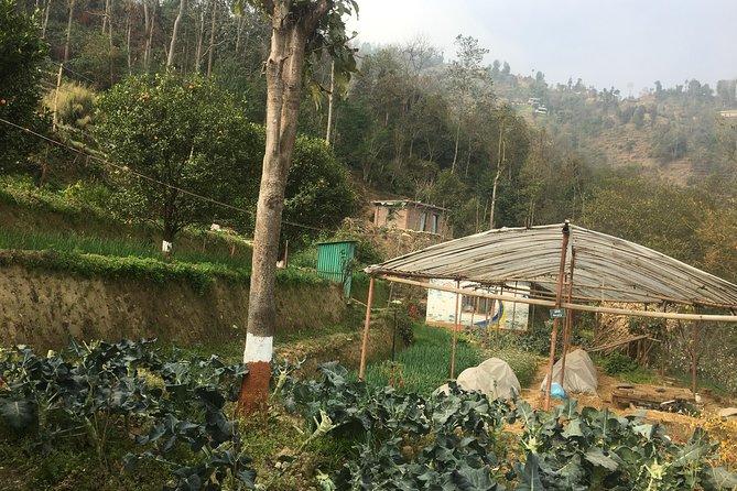 Permaculture Organic Farm Tour in Patlekhet from Kathmandu Nepal