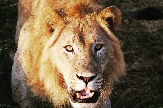 Day tour for Akagera game Drive in Akagera national park