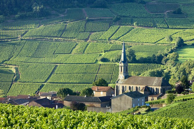 BURGUNDY : Unique Wine Tour from PARIS (Day-trip by TGV - High-speed train)