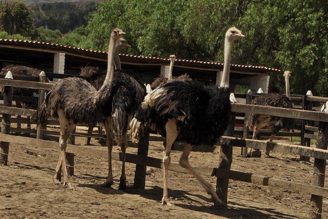 Skip the Line: Granja de Avestruces Admission Ticket